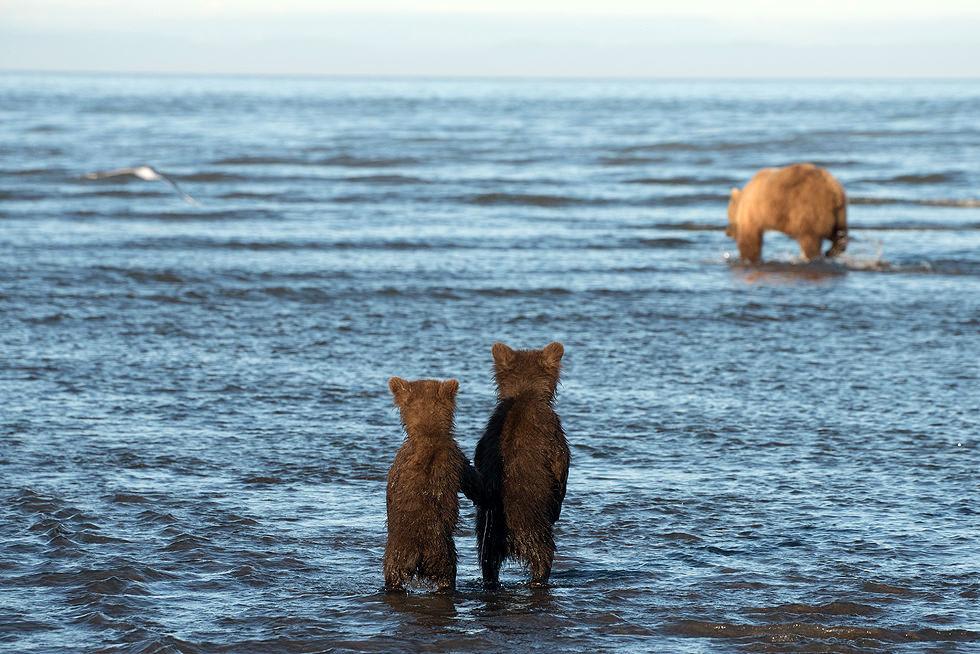 Bears Kids 3