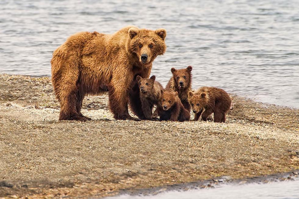 Bears Kids 4