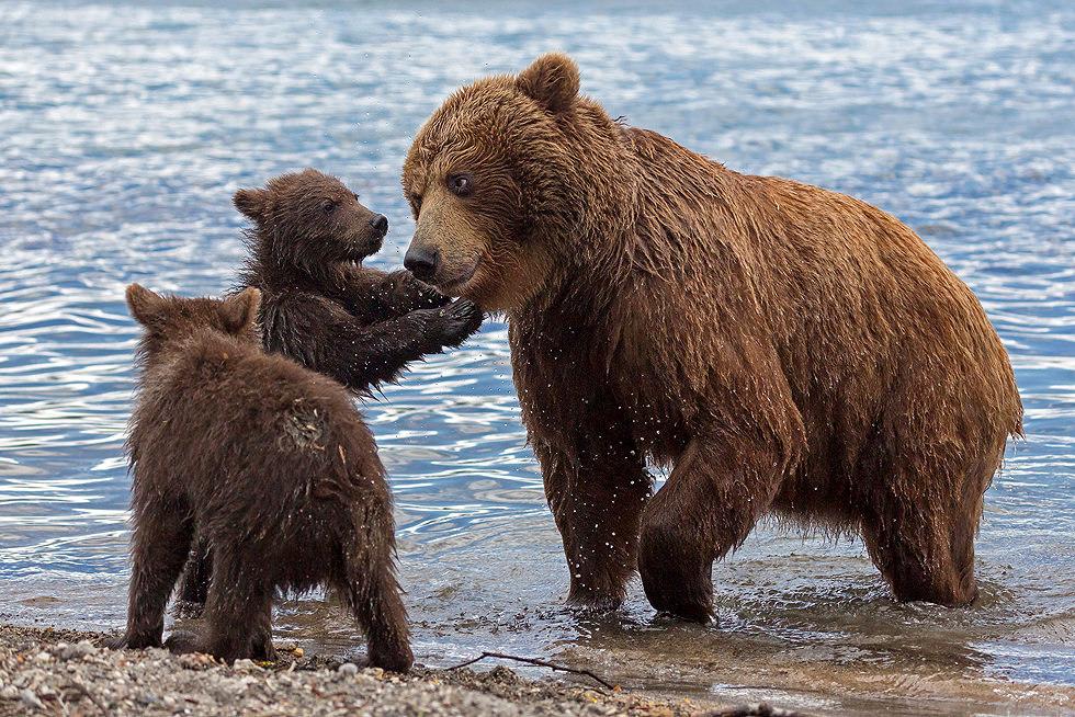 Bears Kids