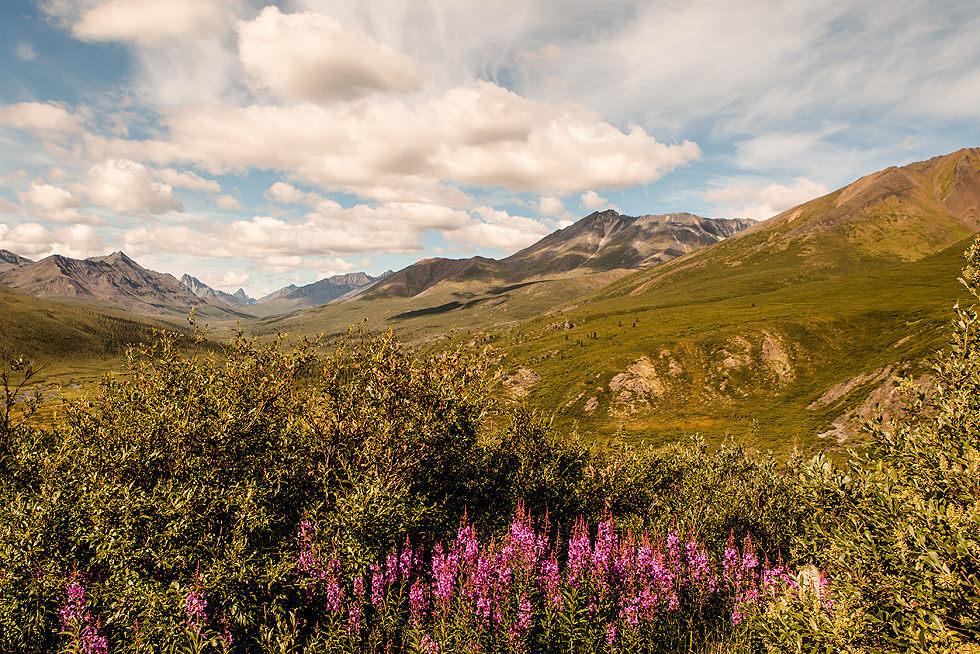 Fireweed Mountain Yukon