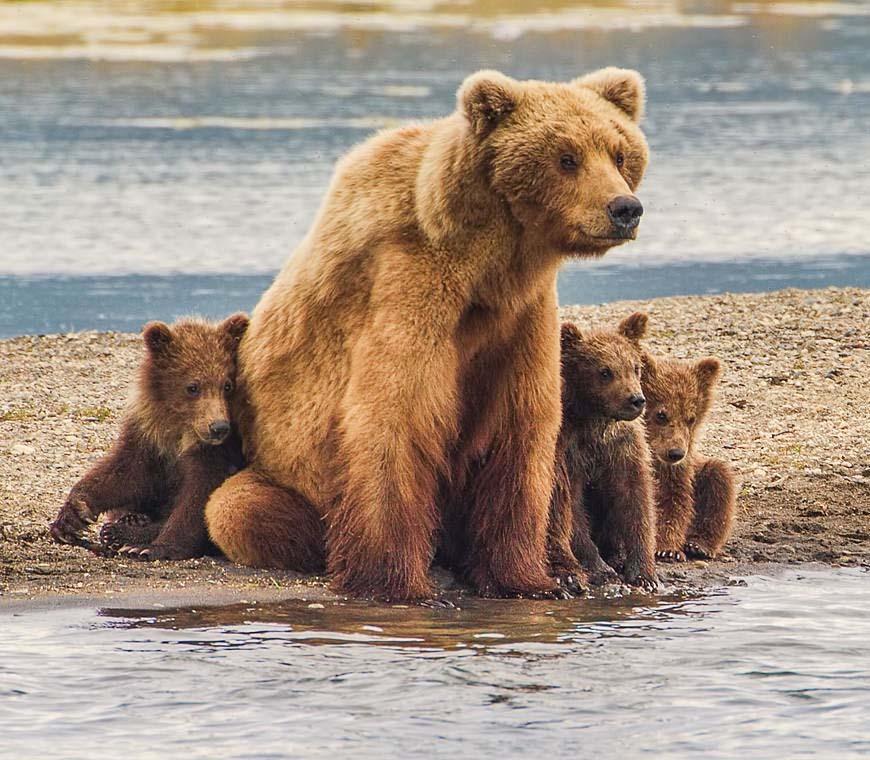 Wildlife}